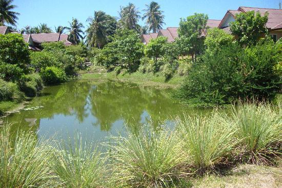 Siam Healing Centre: Lake