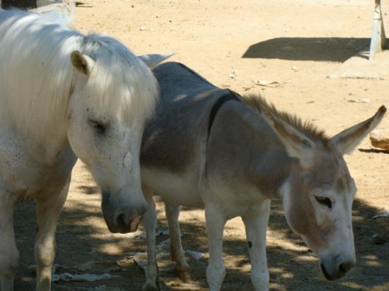 La Ferme du Far West : some of the animals