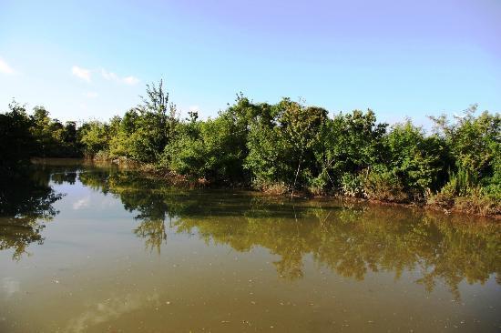 Wusongkou Paotaiwan Forest Marsh Park: wetland area