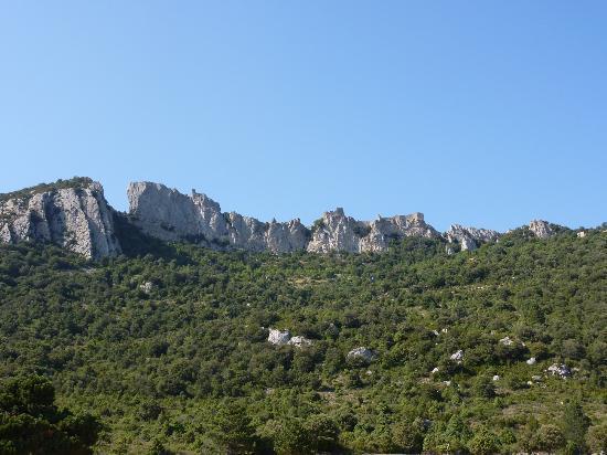 Les Palmiers De La Cite : LE château de Peyrepertuse