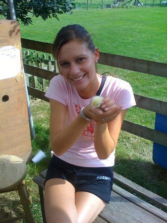Godstone Farm & Playbarn: chick
