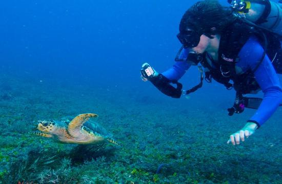Yucatek Divers: easy phoyography for beginners