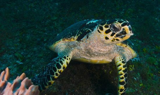 Yucatek Divers: diving turtle reef