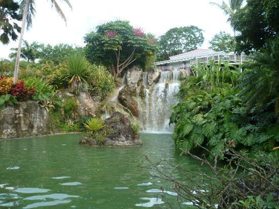 Jardin botanique de deshaies picture of jardin botanique for Jardin botanique guadeloupe