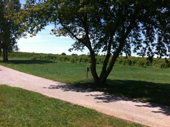 Fenn Valley Vineyards : Vineyards