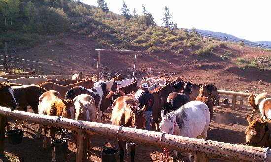 Black Mountain Ranch: The horses