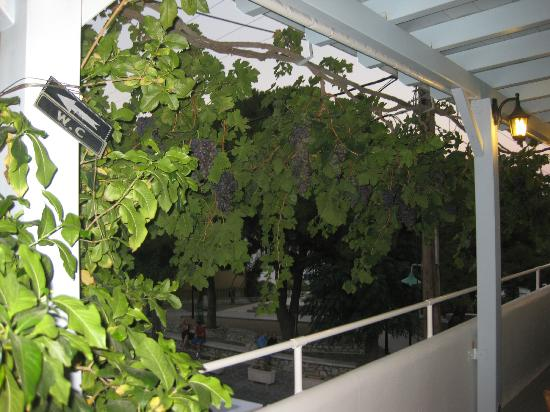 Klarinos bunch of grapes
