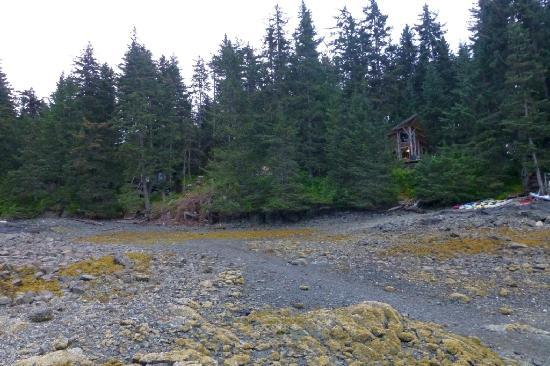 Seaside Adventure Cabins: Looking up at cabins during low tide
