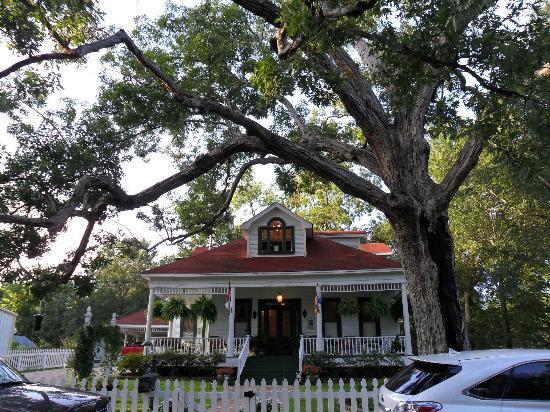 White Oak Manor Bed and Breakfast: Mighty Oak Tree