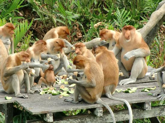 things to do in cape coast, monkey sanctuary, animal sanctuary, ghana wild life