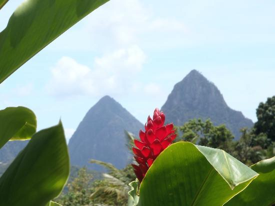 East Winds: The Pitons taken from Marantha gardens