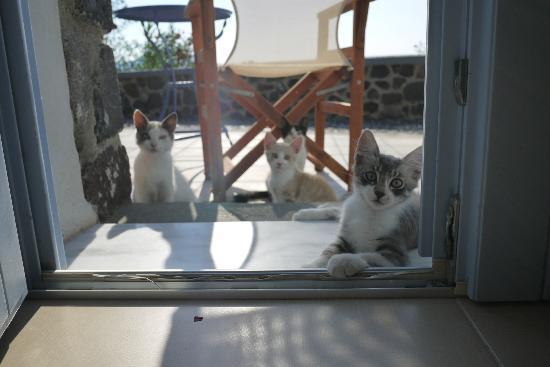 Απάνεμο: Apanemo - waking up to hungry kittens
