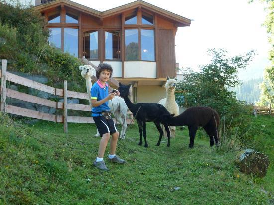 Harmony's Hotel Kirchheimerhof: Verbroederen met enkele dieren van het hotel