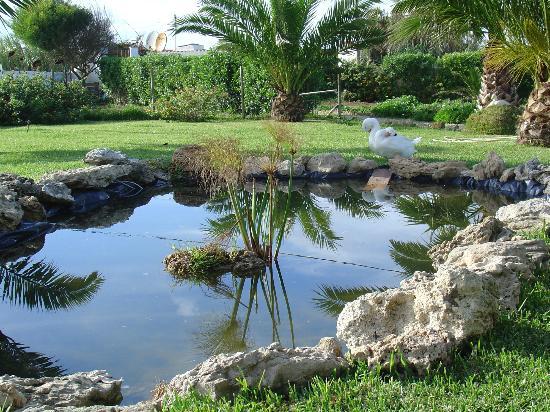Quinta Beira-Mar: Garden