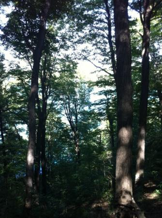 Green Lakes State Park: emerald green lakes and public beach area