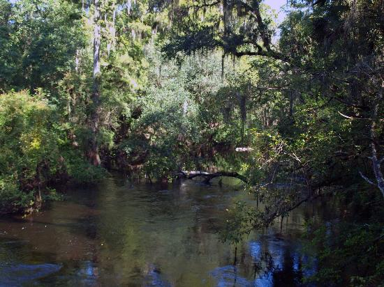 Hillsborough River : Beautiful walk