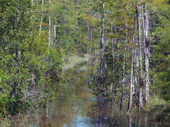 C G S Big Cypress Swamp Buggy Tours