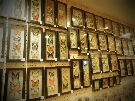 Jadi Batek Gallery
