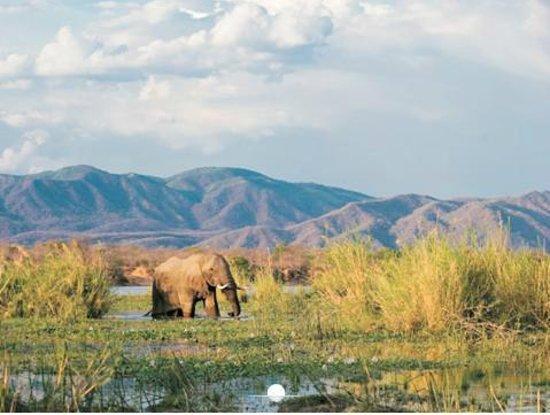 Chongwe River Camp: Elephant in the Chongwe River