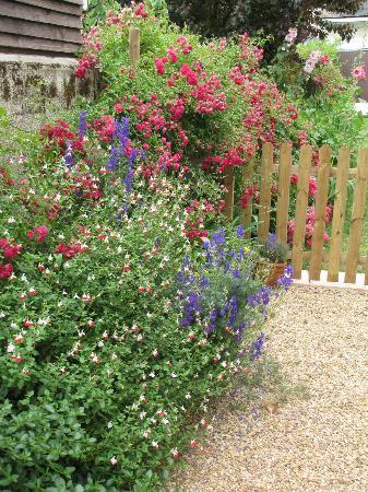 Bleu Agapanthe : Jardin