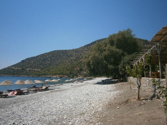 "‪‪Gultekin Pension‬: ""The"" beach
