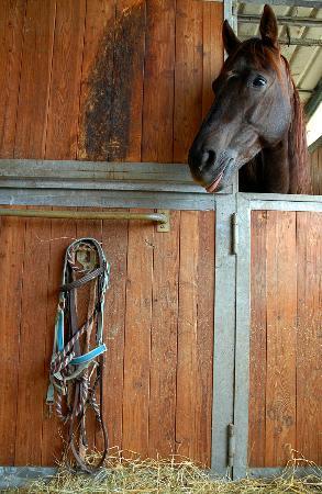 Agriturismo Il Vecchio Maneggio: i cavalli