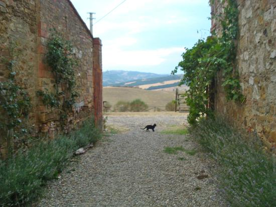 Agriturismo Il Rigo: on the property