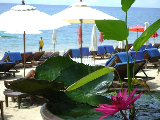 Thai House Beach Resort: Soothing to the eye