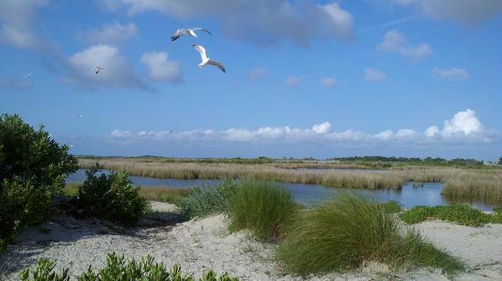 Smith Island: Lagoons