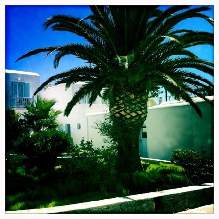 Aeolos Mykonos Hotel: Love it