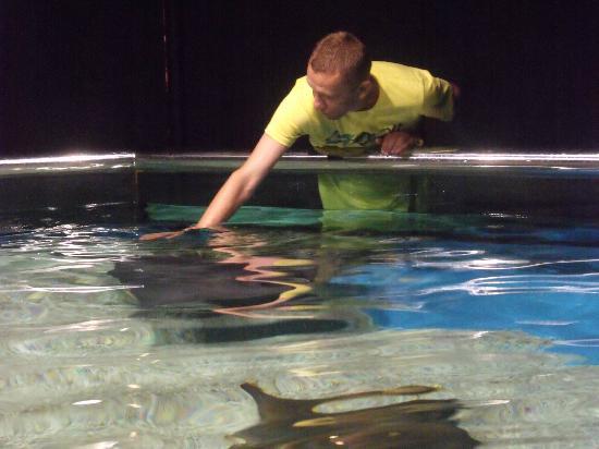 Tocando mantas y rayas picture of aquarium costa de Aquarium en roquetas de mar