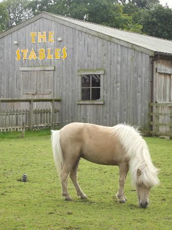 Malton, UK: horse