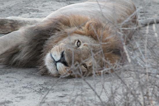 Ndutu Safari Lodge : une rencontre à l'entrée du lodge