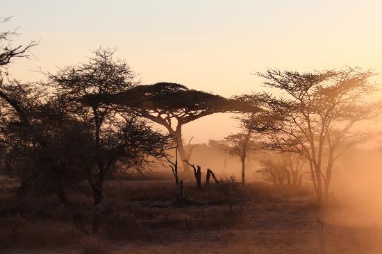 Ndutu Safari Lodge : le soleil se lève sur le lodge
