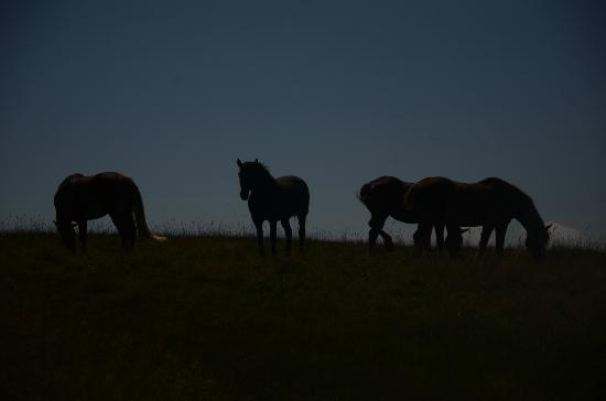 Kingsbrae Arms: Horses on Minister's Island