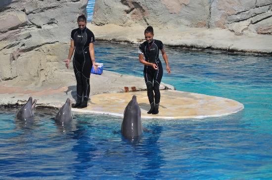 Oltremare : Delfini che giocano