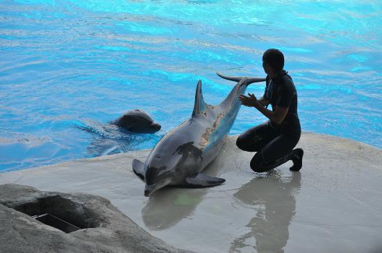 Oltremare : Addestratrice con delfini