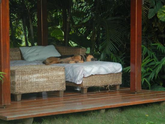 Hotel Vista de Olas : Resident dog relaxing on a covered area by the pool