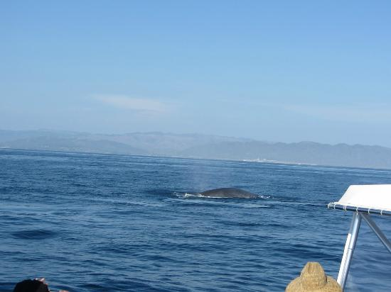 Dana Wharf Whale Watching & Sportfishing: so close to them