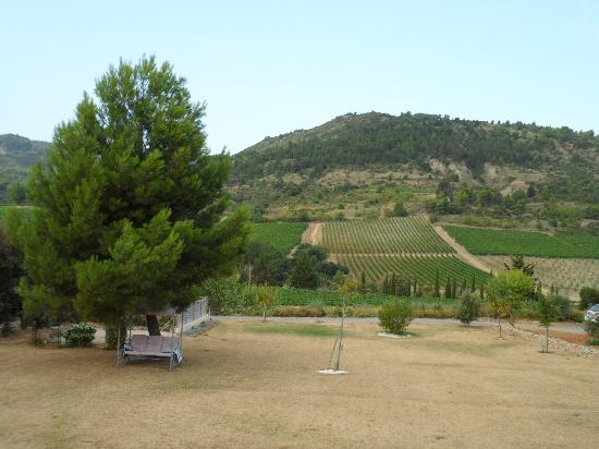 Domaine marselan : view
