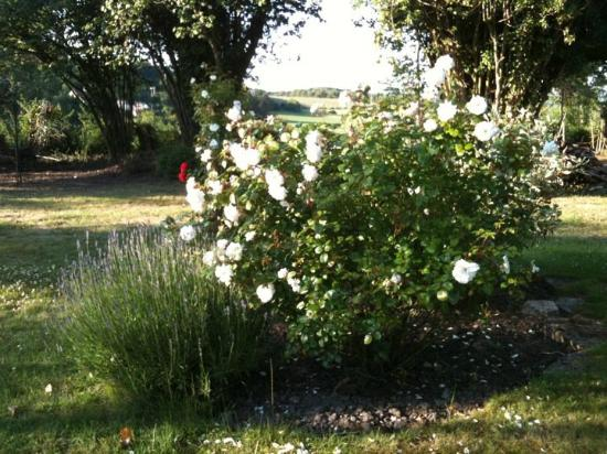 Greenfield : roses