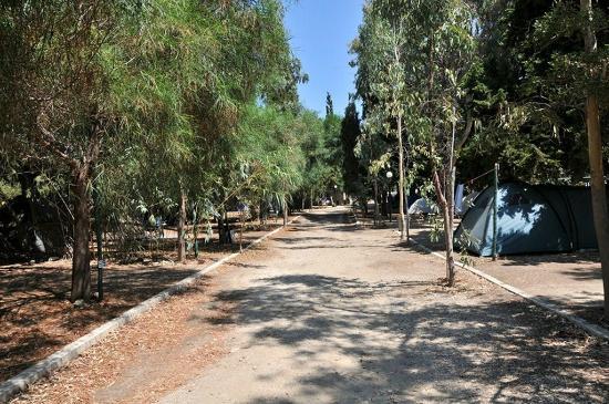 Krios Beach Camping: Πολλά δέντρα για σκιά
