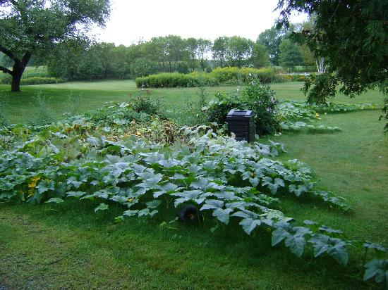 Applewood Manor Bed & Breakfast: Pumpkin patch next to 3 car garage