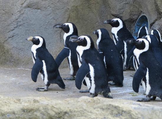 Seneca Park Zoo: Penguins