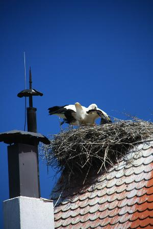 Sisak-Moslavina County, Croacia: Storks on the roof of Tradicije Cigoc