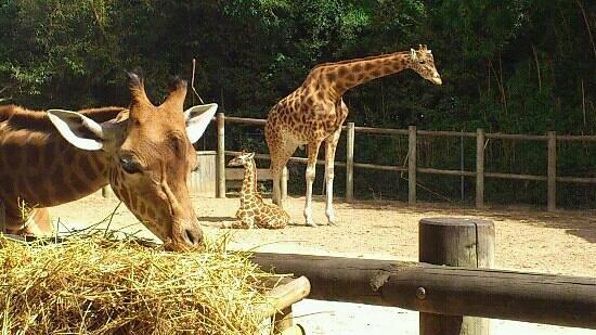 les girages au zoo des sables.