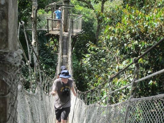 ExplorNapo Lodge: Canopy Walkway tour comes with the Napo Lodge