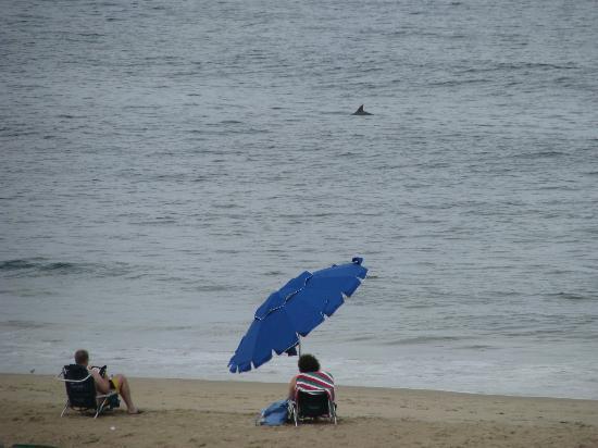 Residence Inn Virginia Beach Oceanfront: Dolphins!