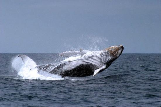 Viejamar Hostel: Whale watching
