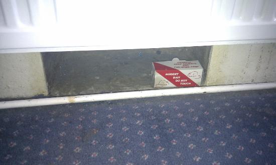 The Continental Hotel : trappola per topi!!!